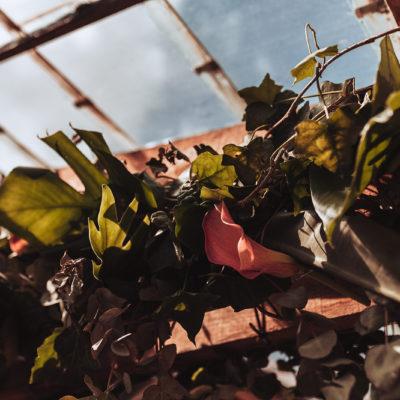 huwelijk trouwfotografie madame cocotte tropical-42_websize